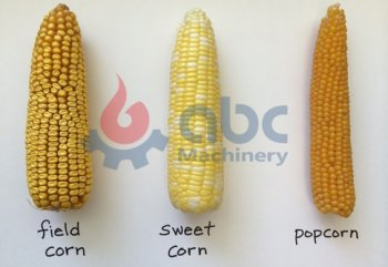 What Kind of Corn/Maize Fits For Flour Milling