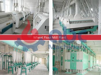 Starting Your Dream Wheat Flour Mill Plant Easily